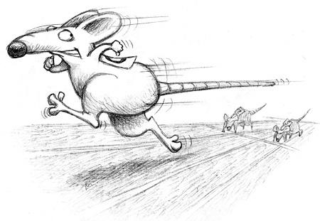 The Mangoman Rat Race