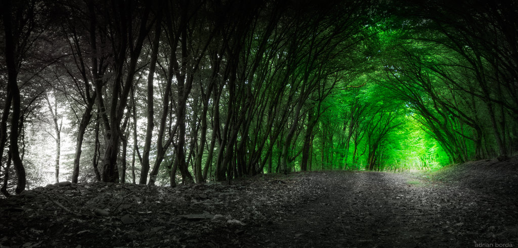 the_path_of_the_lost_by_borda-d68itoo
