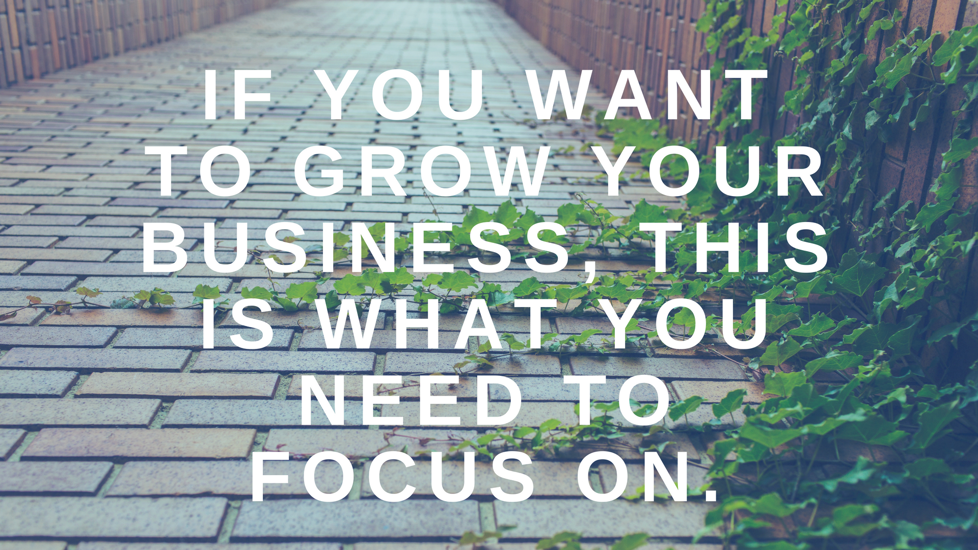 If You Want to Grow Your Business, This is What You Need to Focus on.